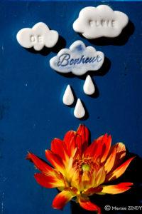 fleur arrosée par des nuages en porcelaine
